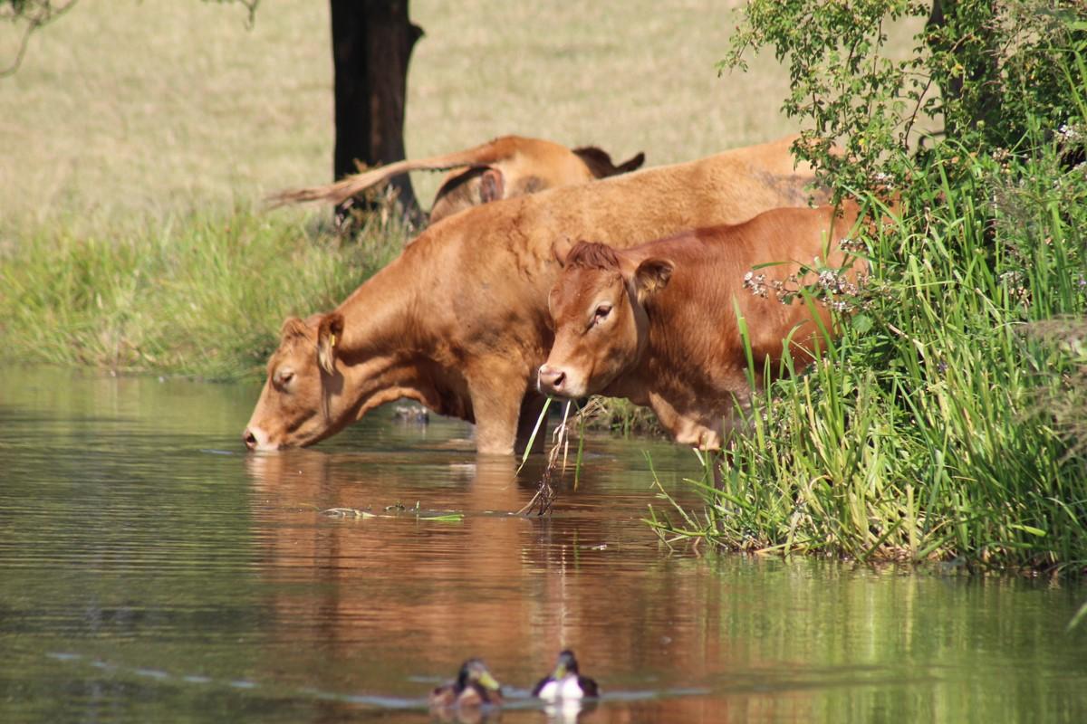 Farm & Rural Liaison
